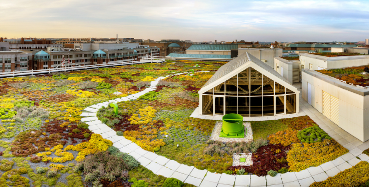 Extensive Green Roofs bring value to your building